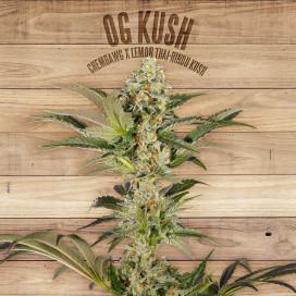 The Plant Organic Seeds 2-6 OG Kush Indica Feminizada Flor