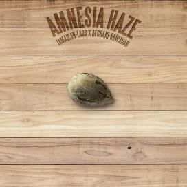 The Plant Organic Seeds 2-1 Amnesia Haze Sativa Feminizada Semilla