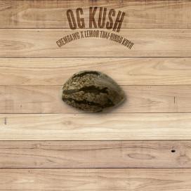 The Plant Organic Seeds 2-6 OG Kush Indica Feminizada Semilla