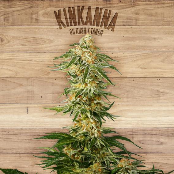 The Plant Organic Seeds 3-3 Kinkanna Indica Feminizada Flor