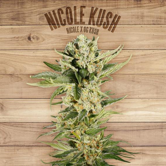 The Plant Organic Seeds 6-1 Nicole Kush Indica Feminizada Flor