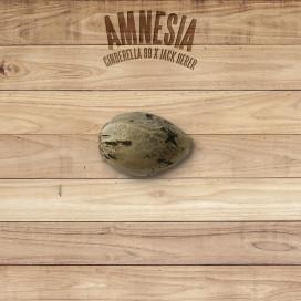 The Plant Organic Seeds 4-1 Amnesia Sativa Feminizada Semilla