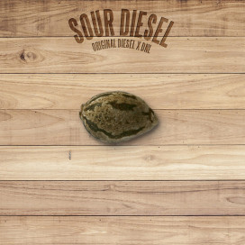 The Plant Organic Seeds 4-3 Sour Diesel Hibrida Feminizada Semilla