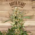 The Plant Starter Kit